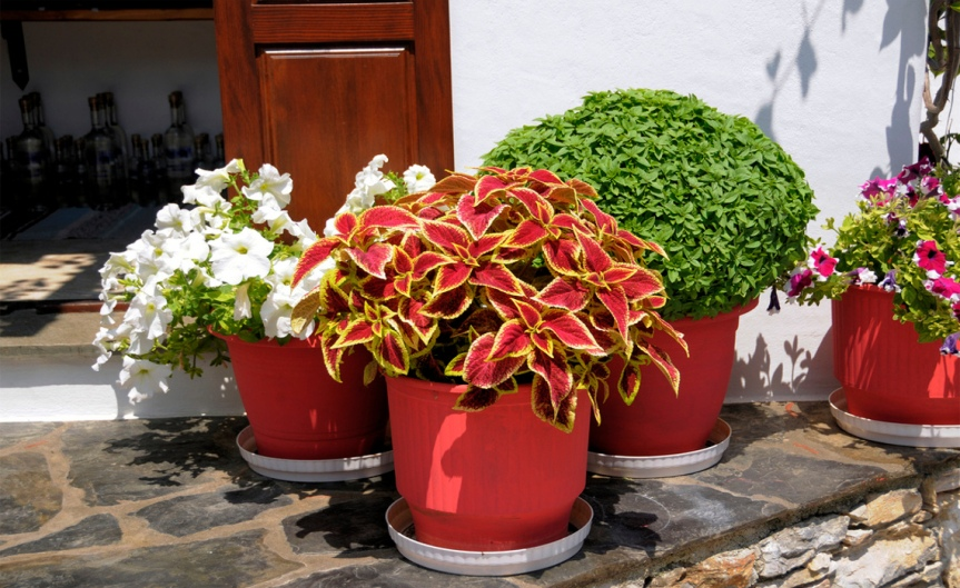 Container Plants [CCBY Son of Groucho]