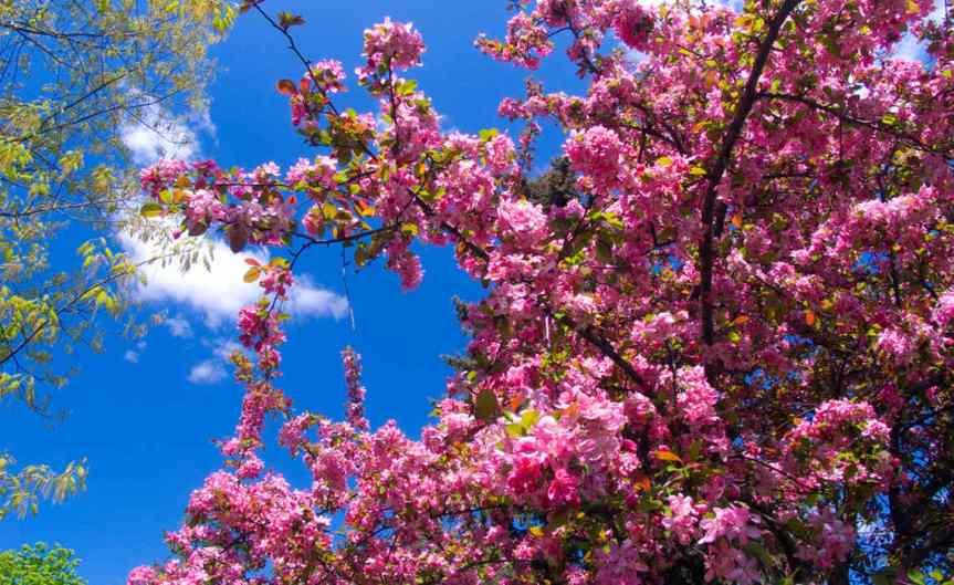 Fruit Tree [CCBY John Talbot]