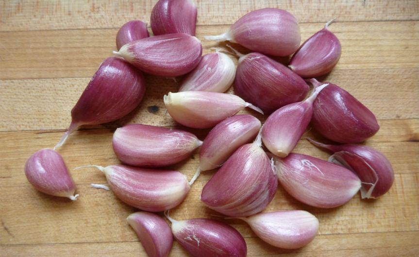 Garlic [CCBY Rebecca Siegel]