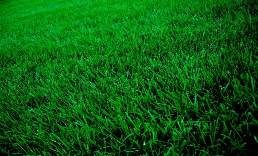 Grass [CCBYSA Ian T McFarland]