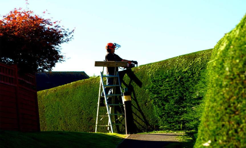 Hedge Trimming [CCBY Pug50]