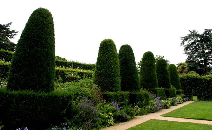 Hedging Plants [CCBY Dave Catchpole]