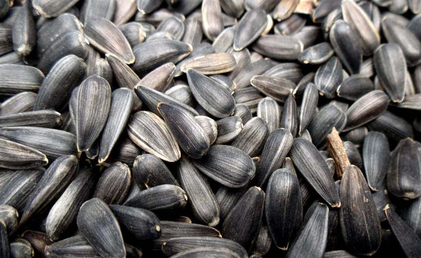 Sunflower Seeds [CCBY Oatsy40]