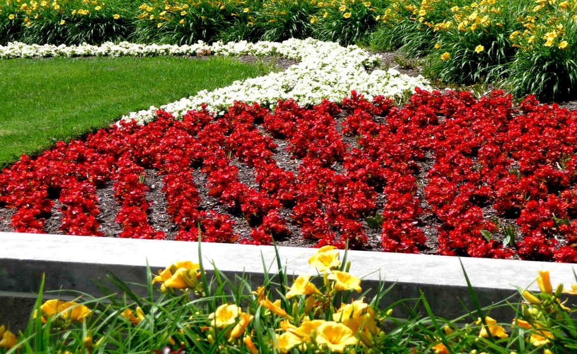 Beautiful Flower Bed [CCBY IrisDragon]