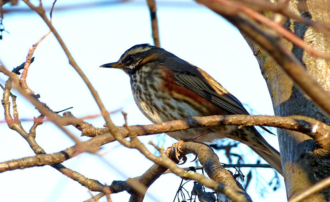 Bird On Twig [CCBYSA Nottsexminer]