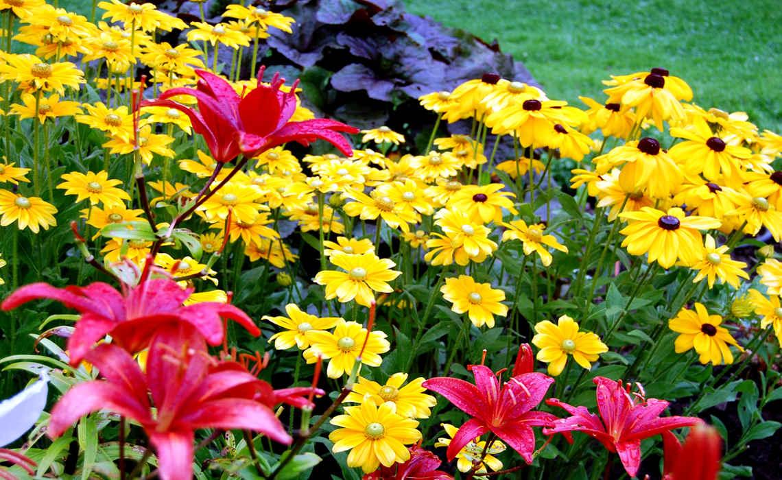 Border Plants [CCBY InAweOfGodsCreation]