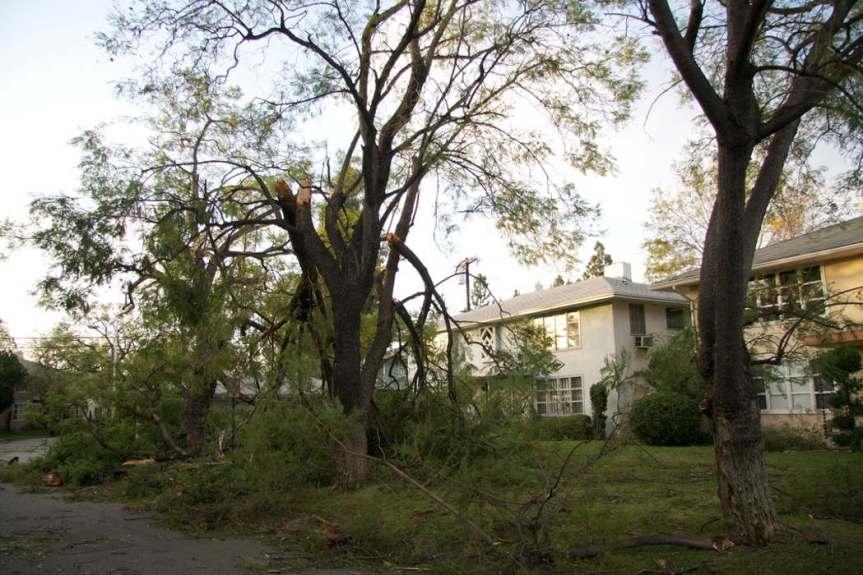 Damage Branches [CCBY JasonIpploito]