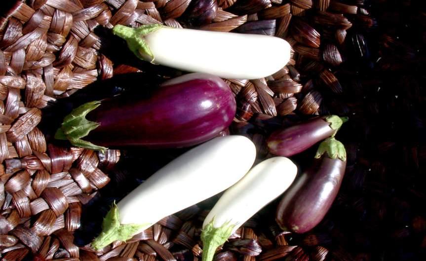 Eggplants [CCBY Glenn]