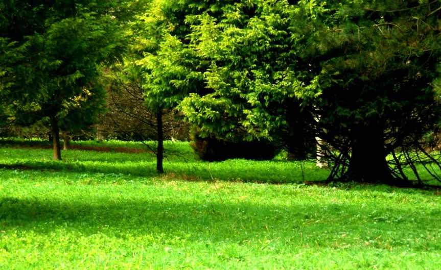 Evergreen Garden [CCBY Dominic Alves]