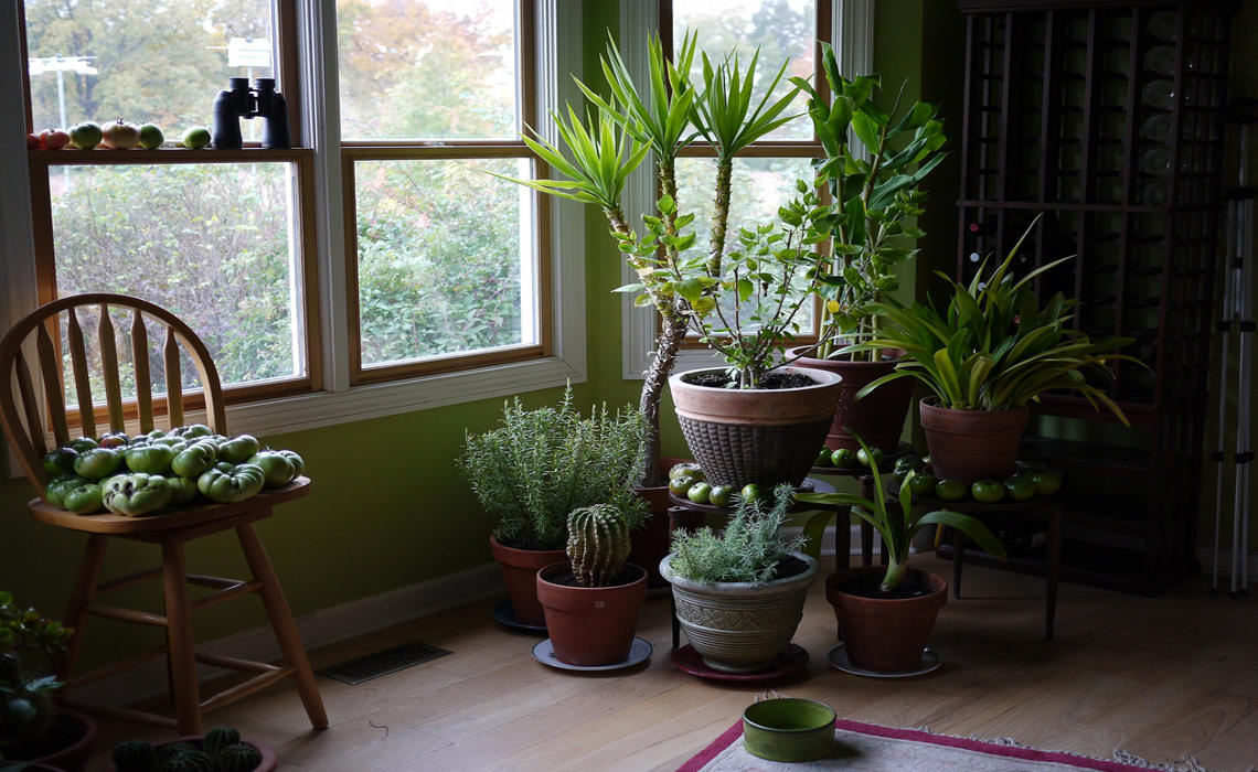 Houseplants [CCBYSA FD Richards]