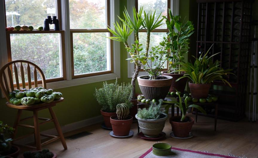 Houseplants [CCBYSA FD Richards]