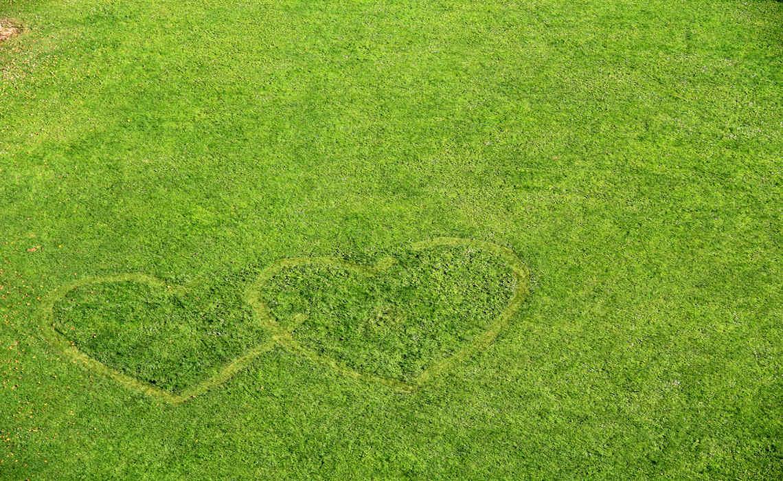 I Love My Lawn [CCBYSA MrCubus]