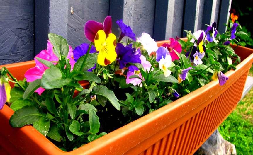 June Flowers [CCBY Liz]