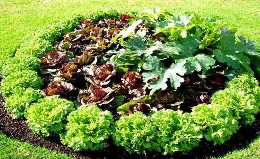 Outdoor Vegetables [CCBYSA Amandabhslater]
