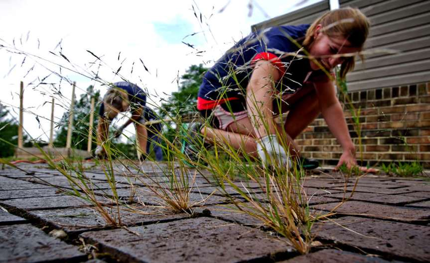 Plucking Weeds [CCBY USDepartmentofAgriculture]