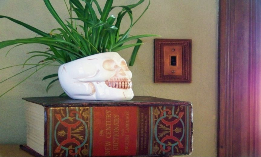 Skull Houseplant [CCBY Avia Venefica]