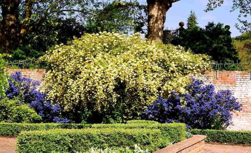 Spring Shrub [CCBY Maxwell Hamilton]