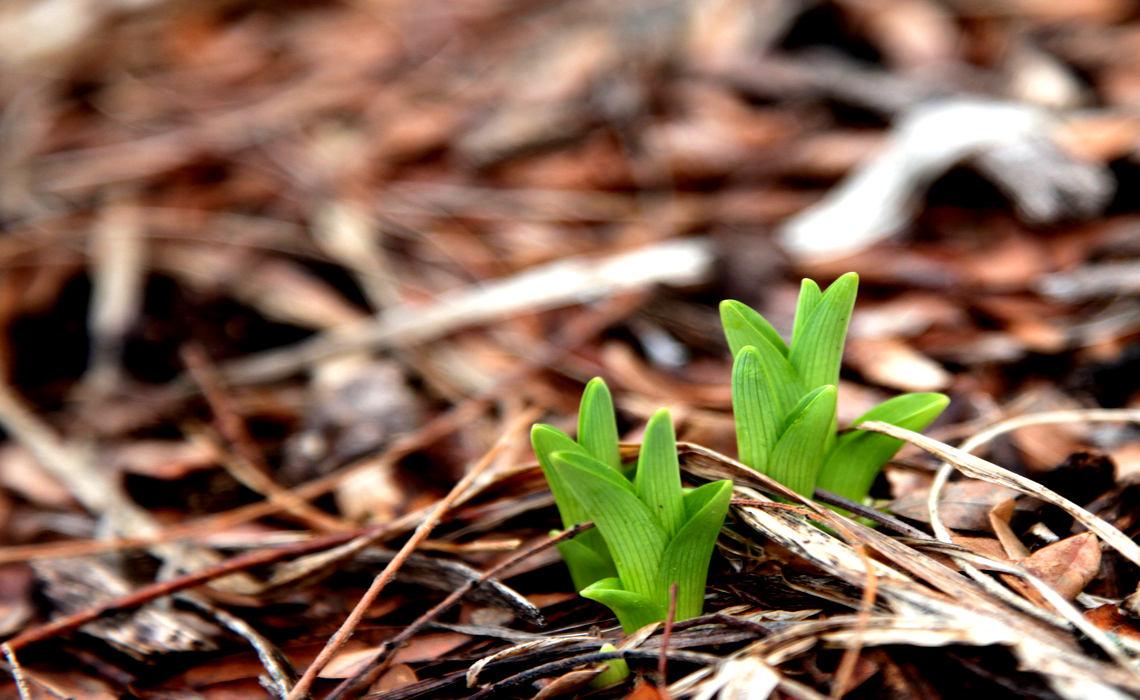 Tender Plants [CCBY John Benson]