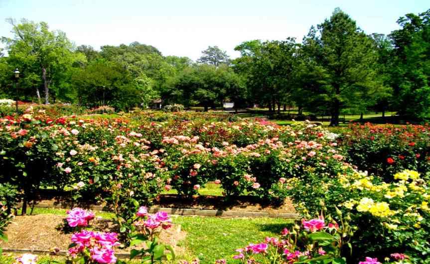 Texan Roses [CCBY Rober Nunnally]