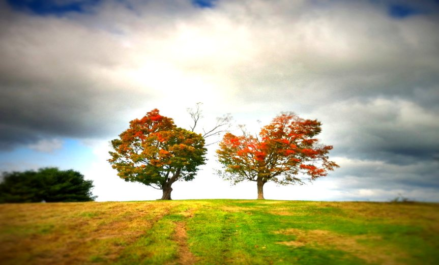 Trees Apart [CCBY Trace Meek]