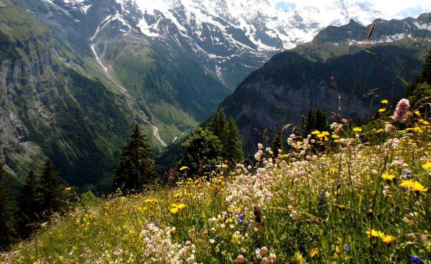 AlpineMeadow [CCBY Oatsy40]