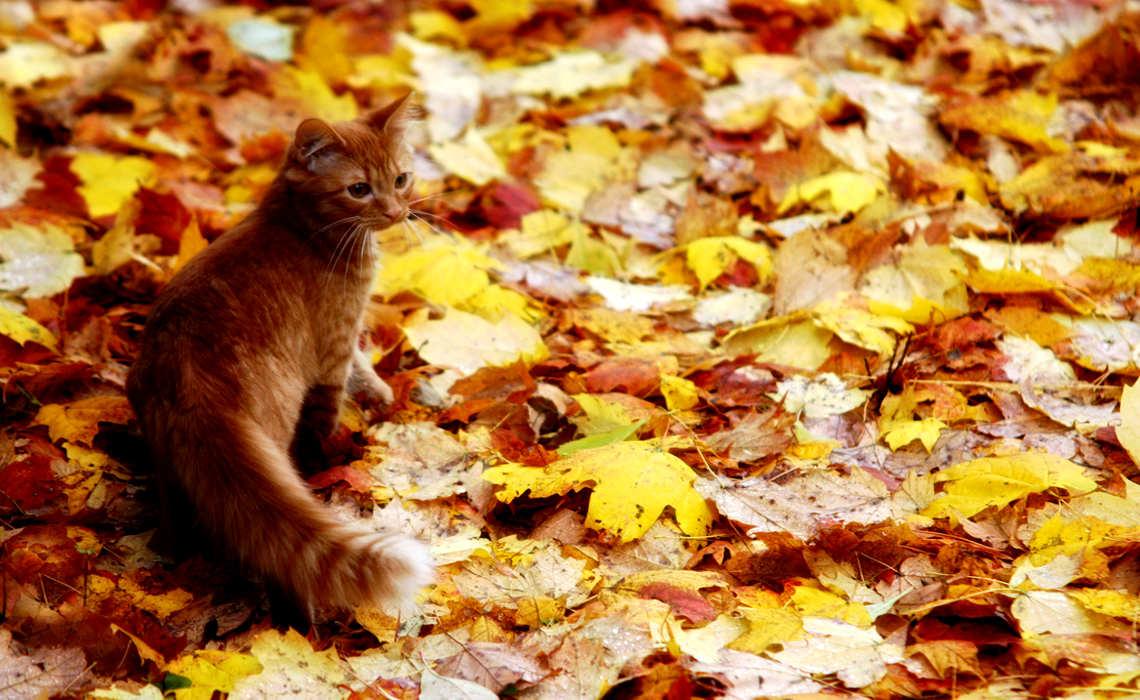 Autumn Kitty [CCBY DanZen]