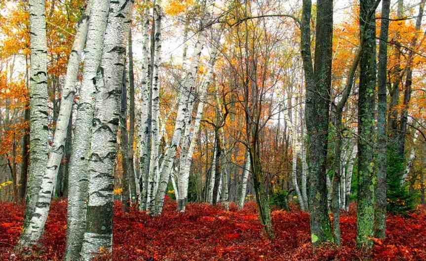 AutumnForest [CCBY NicholasT]