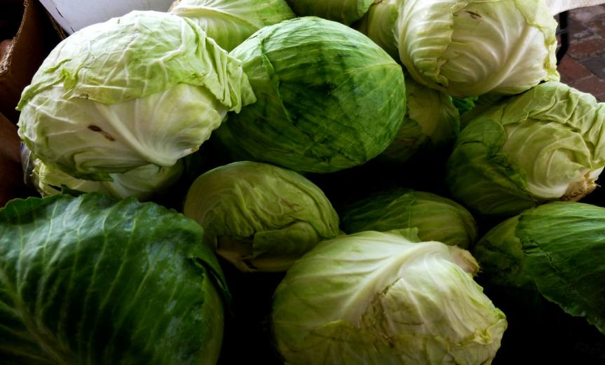 Cabbage [CCBY MikeLicht]