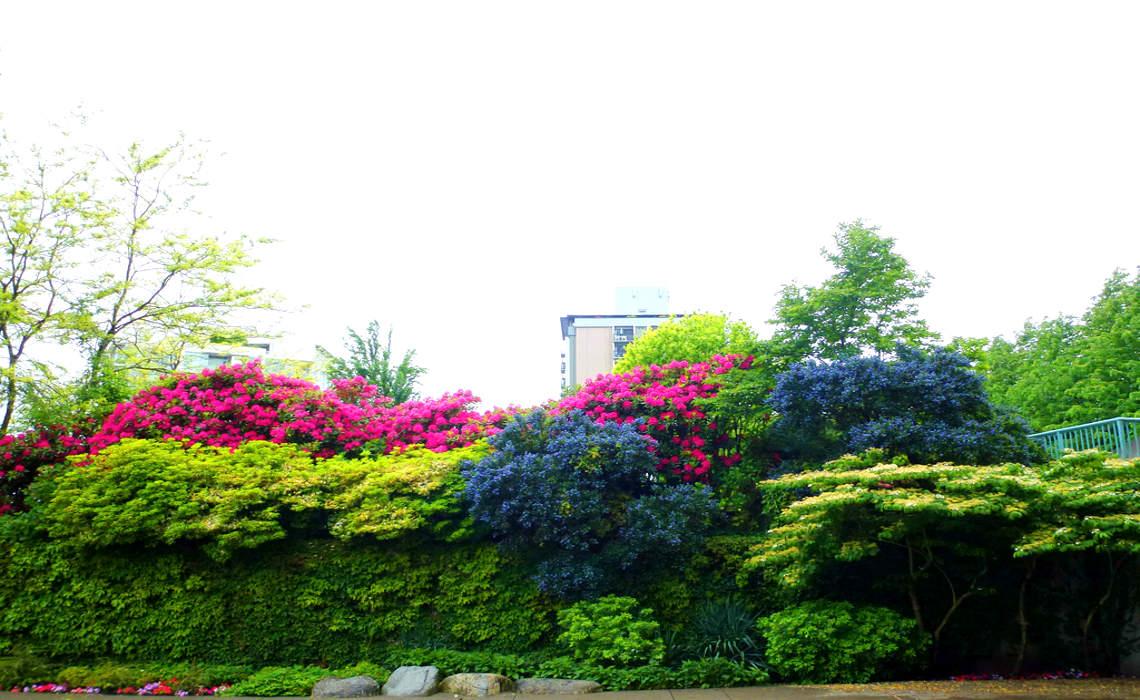 Coloured Hedges [CCBY Peggy2012CREATIVELENZ]