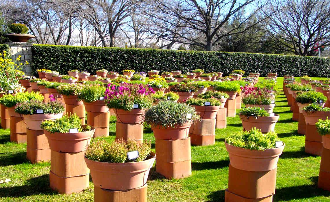 Container Plant Garden [CCBY gurdonark]