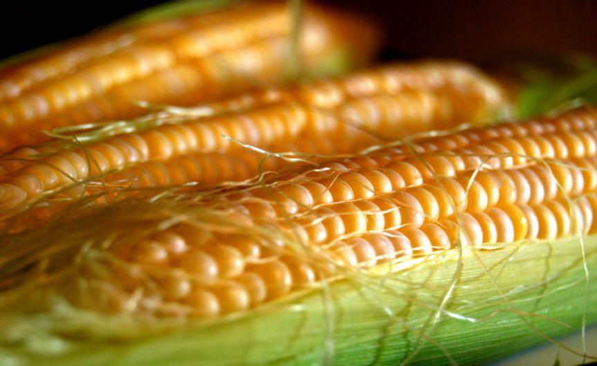 Corn [CCBY AliceHenneman]