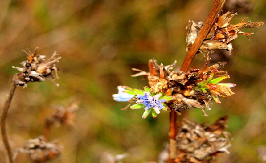 Dead Blossom [CCBY Roberto Verzo]