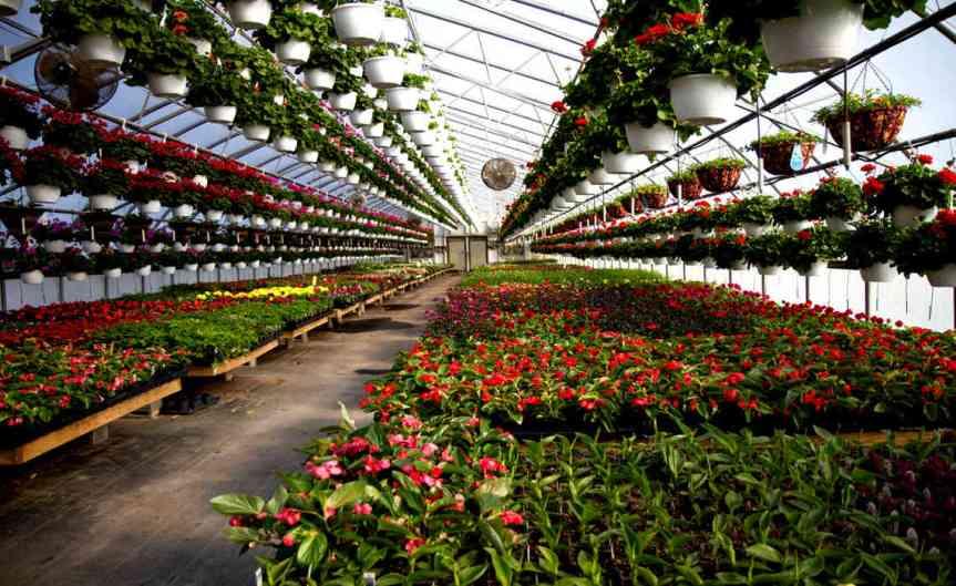 Greenhouseplants [CCBY-SA KenFromMD]