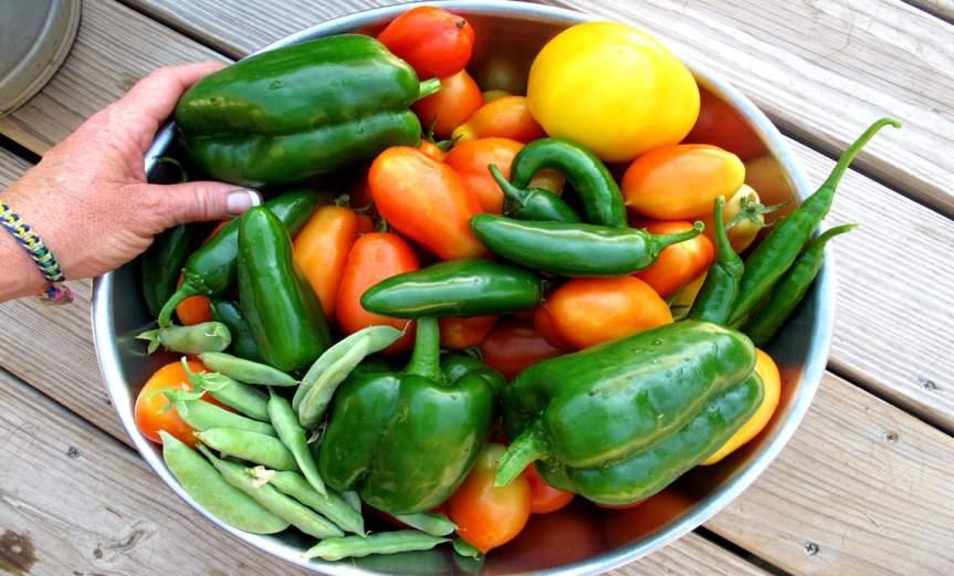 Harvest [CCBY OakleyOriginals]