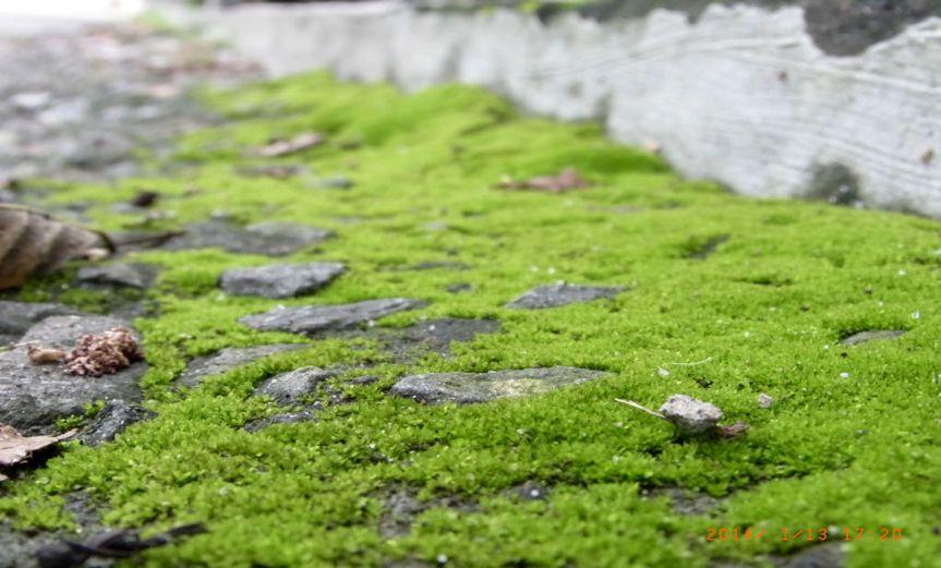 Moss [CCBY nSeika]