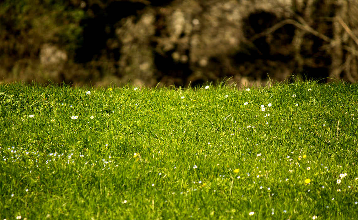 PerfectLawn [CCBY PaoloSarteschi]