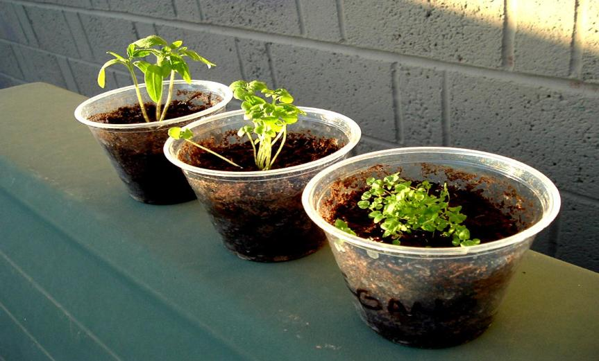 Potted Herbs [CCBY Tim Patterson]