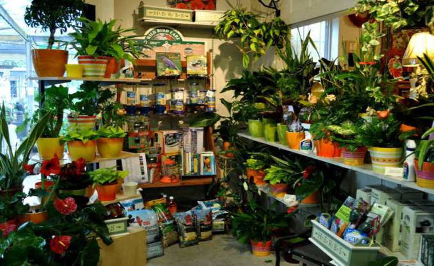 Potted Plants [CCBY The Greenery Nursery]