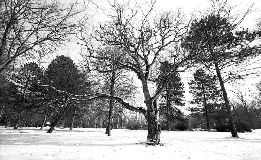 Snowy_Park_CCBY_EugenAnghel