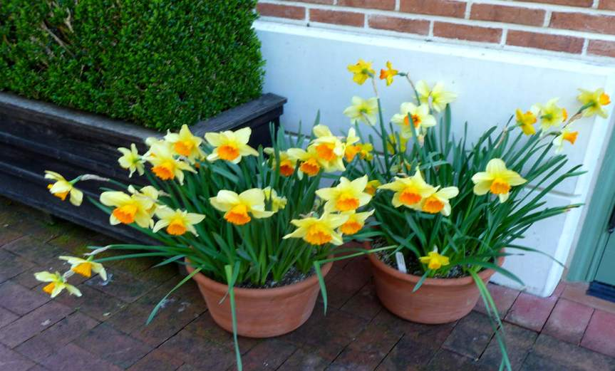 SpringBulbs [CCBY IrisDragon]