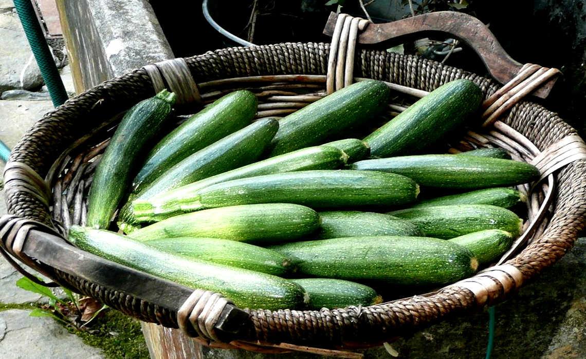 Zucchini [CCBY nociveglia]