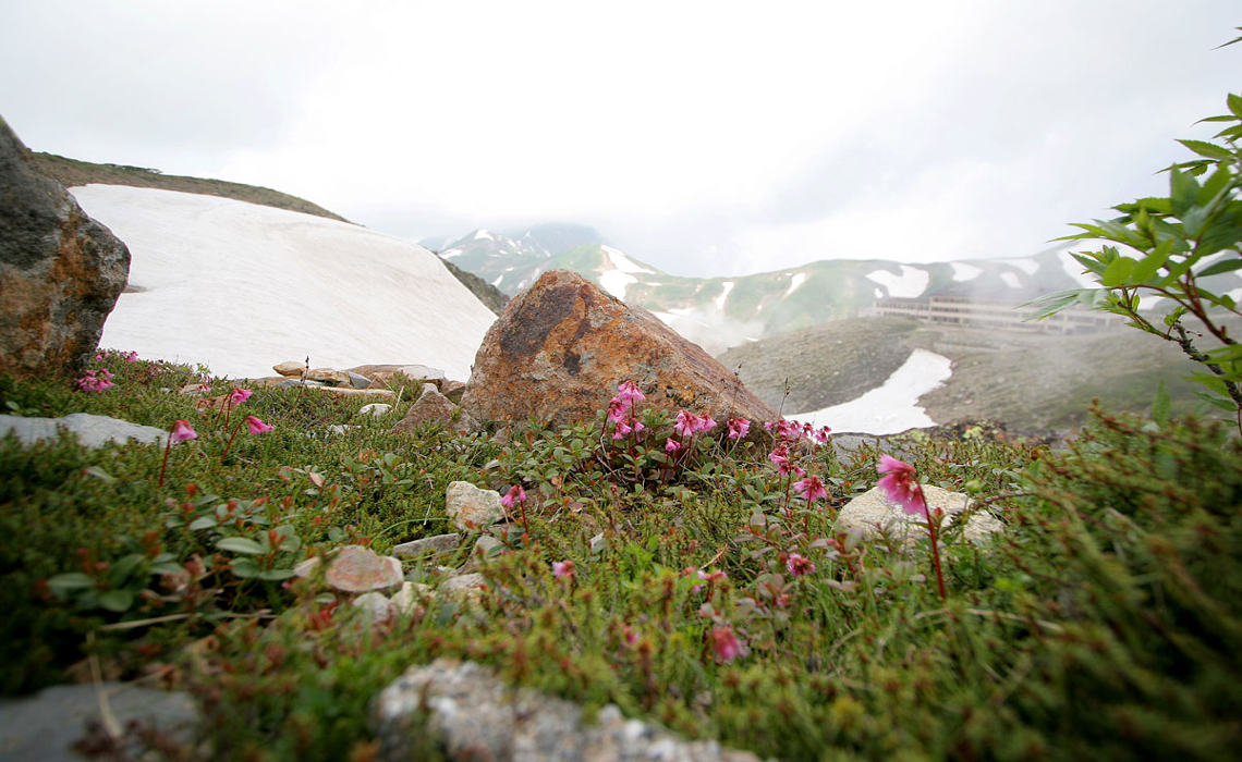 Alpines [CCBY Kabacchi]