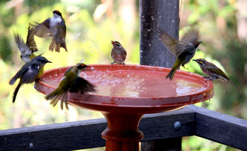 Birdbath [CCBY PeterFirminger]