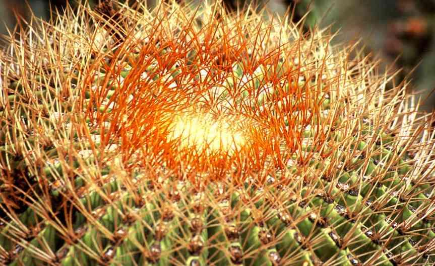 Cactus [CCBY KevinDooley]