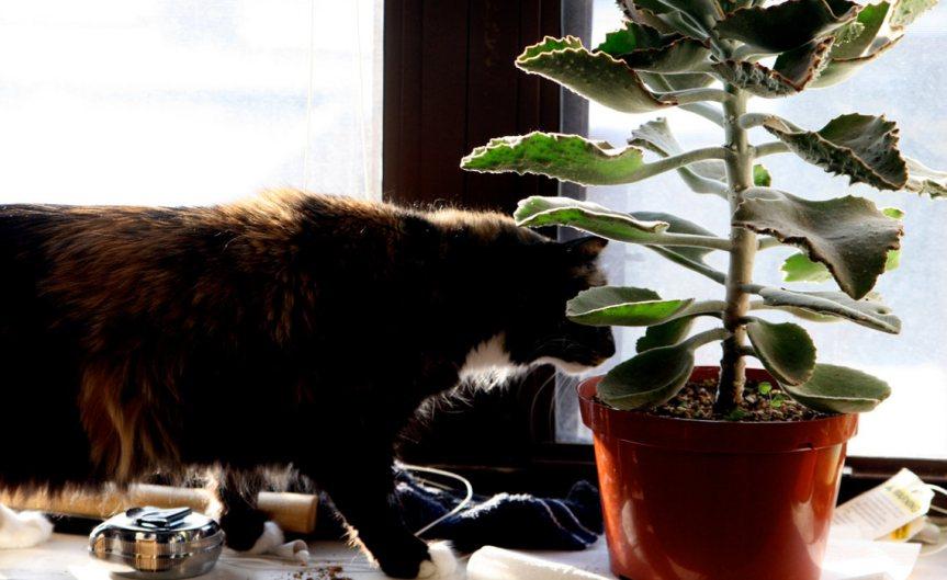 CatPlant [CCBY QuinnDombrowski]
