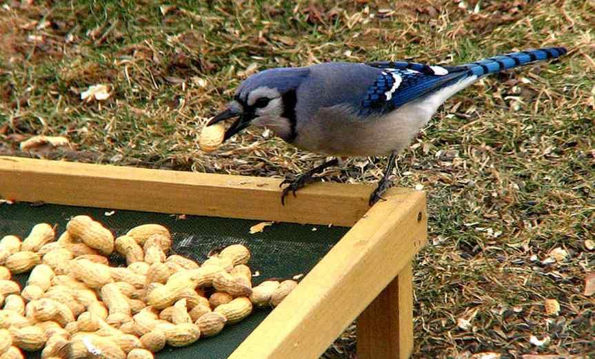 FeedingBird [CCBY fishhawk]