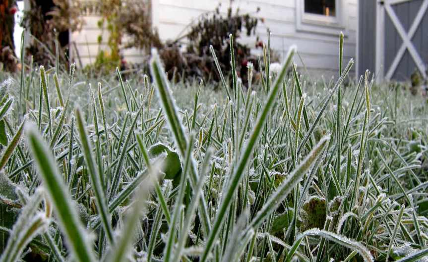 FrostedGrass [CCBY ChrisWaits]