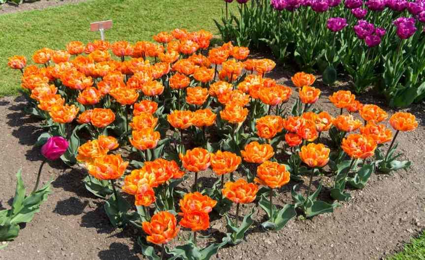 GardenBorders [CCBY-SA WilliamMurphy]