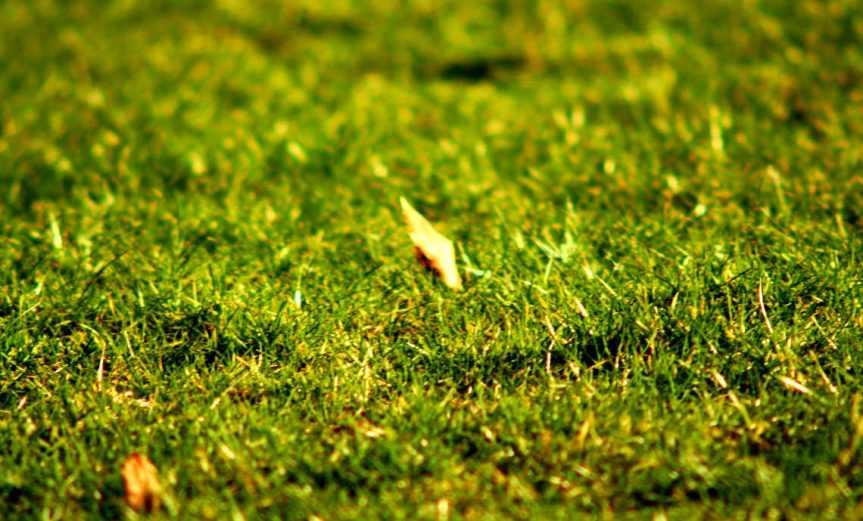 Lawn [CCBY BolndinRikard]