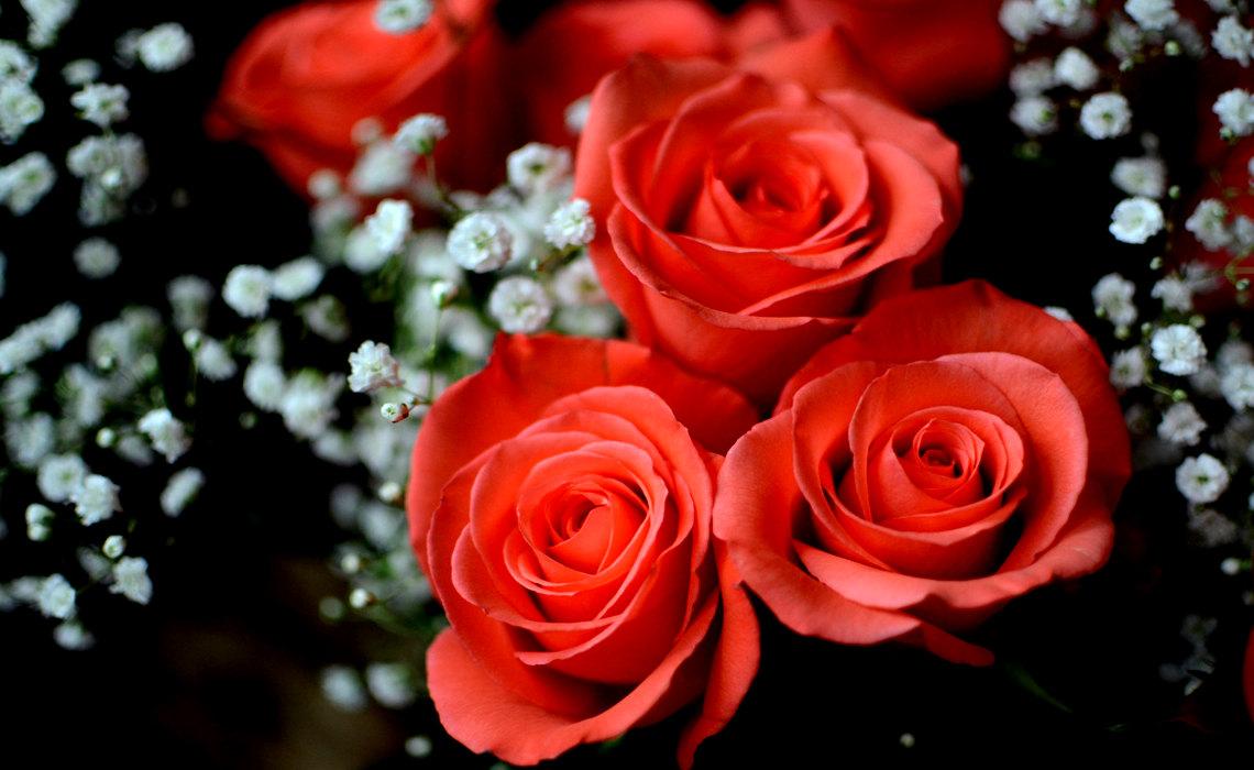 RoseBlossoms [CCBY Slgckgc]